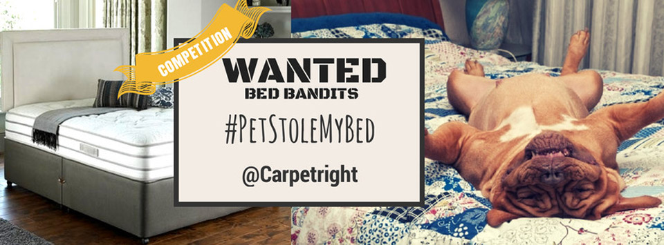 pet-stole-my-bed-banner(1)