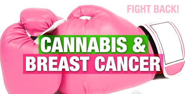 cannabis breast cancer
