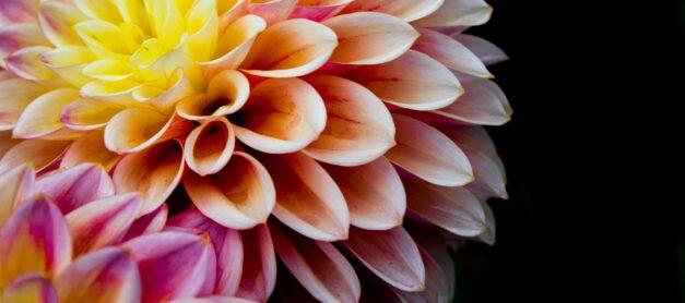 Plants that Symbolise Sympathy